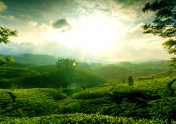 Munnar Through The Eyes Of Kerala Holidays India