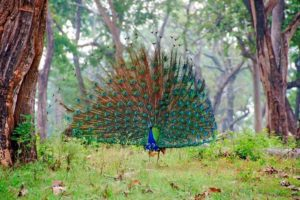 Best time to visit Ooty; Mudumalai National Park