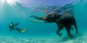 Swimming with Rajan, the elephant; Andaman and Nicobar Islands Tourism