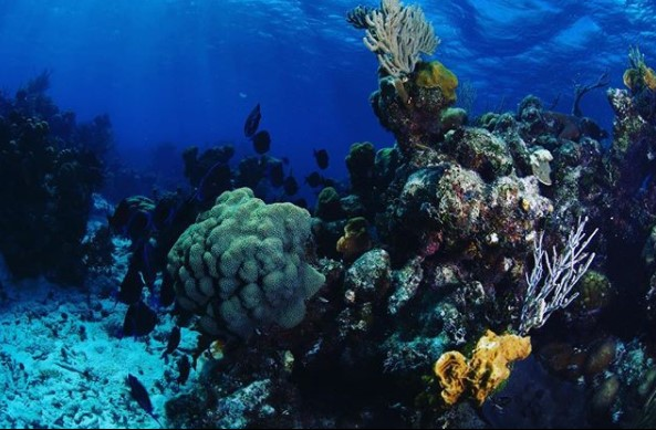scuba diving; andaman and nicobar island tourism