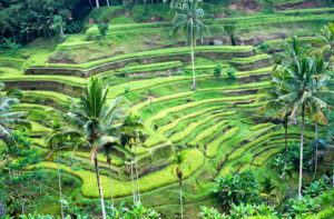 Ubud; places to visit in Bali