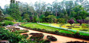 Best time to visit Ooty; Botanical garden